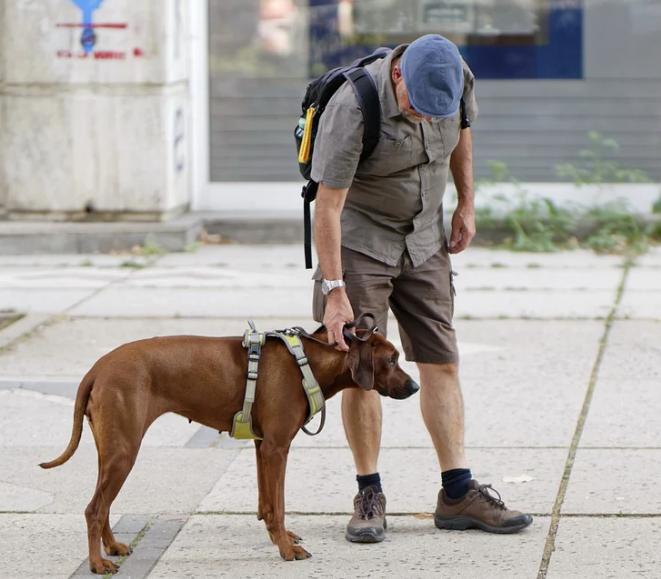 Où dois-je travailler en tant que dresseur de chiens ?